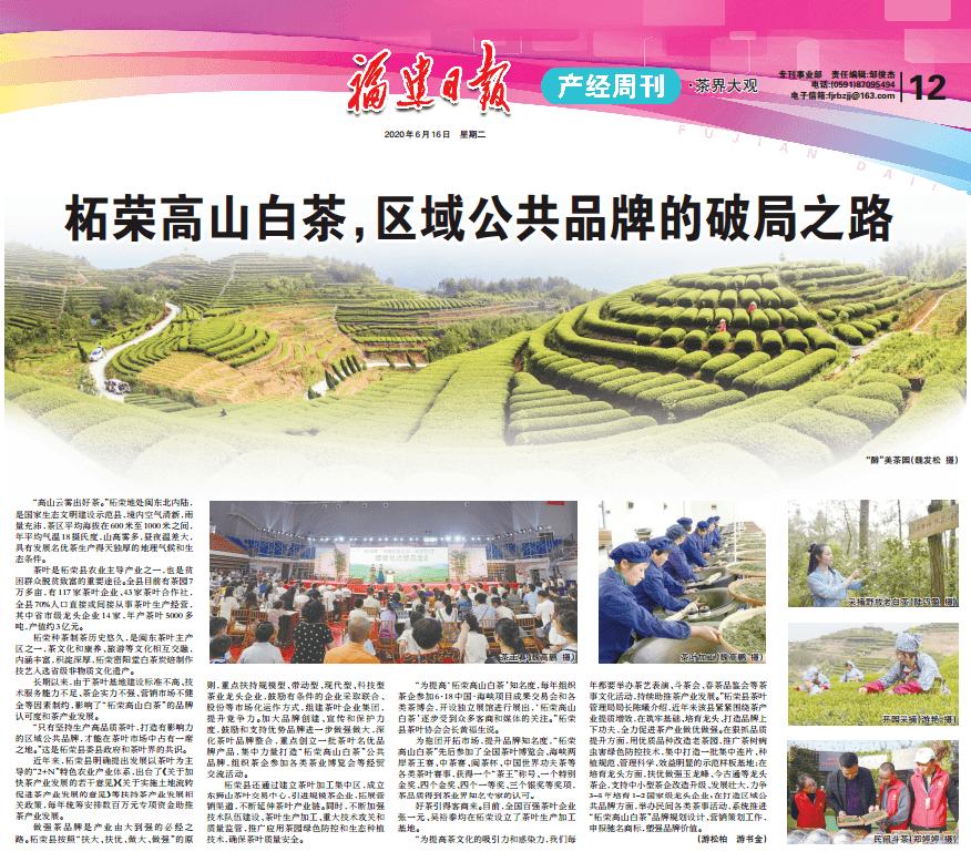 浙荣高山白茶--打破区域公共品牌局面之路