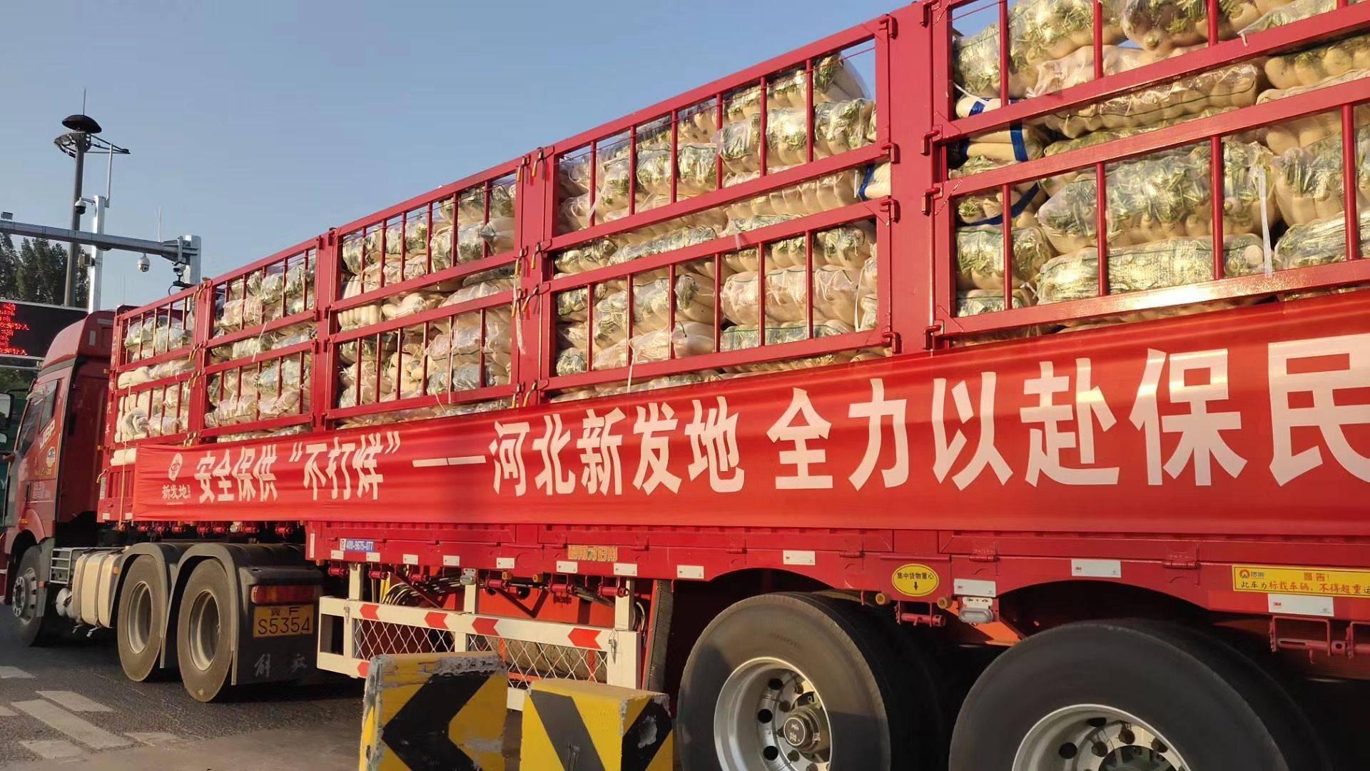 <strong>河北新区首批150吨保底蔬菜今天运</strong>