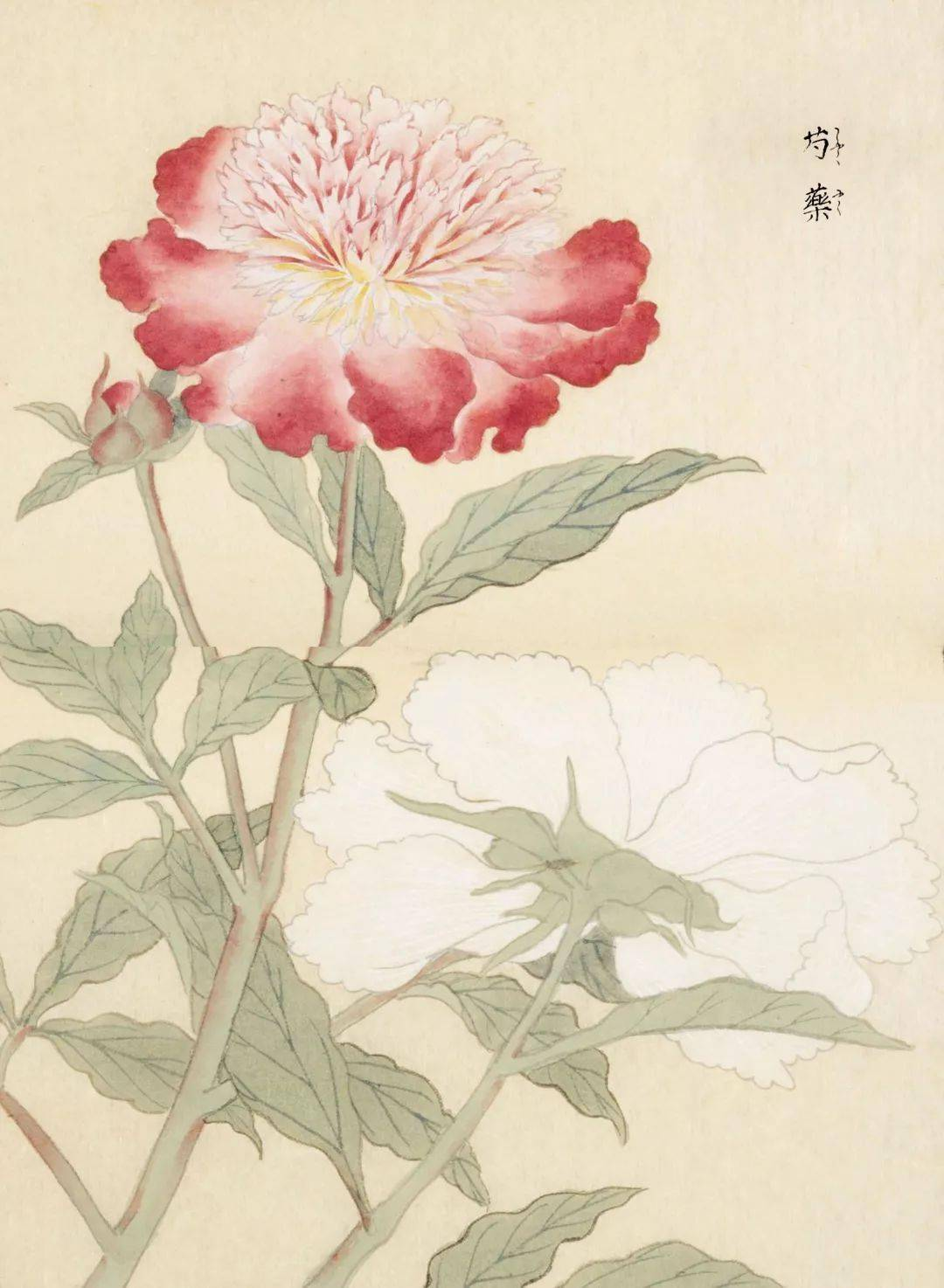 古诗词里常出现的植物,居然可以这么美!