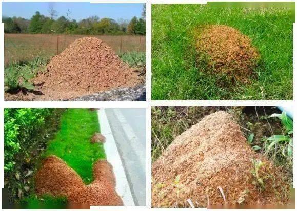 【注意】远离路边的这种小土堆,严重可致命!