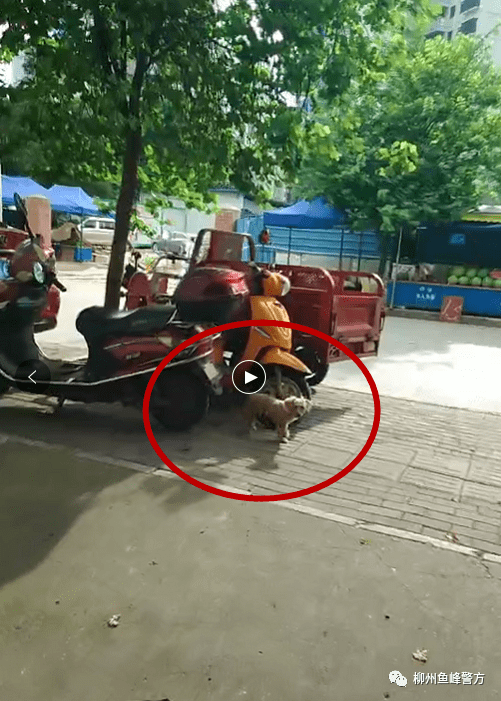 广西柳州三天内10多人因遛狗不牵绳受罚,有被罚者称不习惯