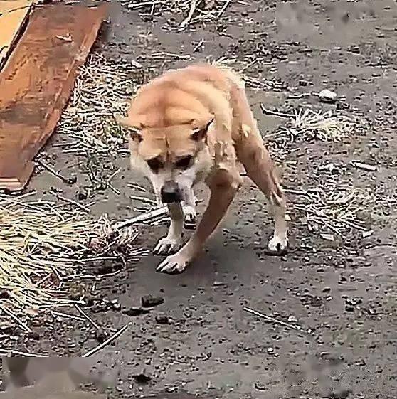 """公园里散步发现一只长着狗脸的""""猴子"""",凑近一看很伤感"""