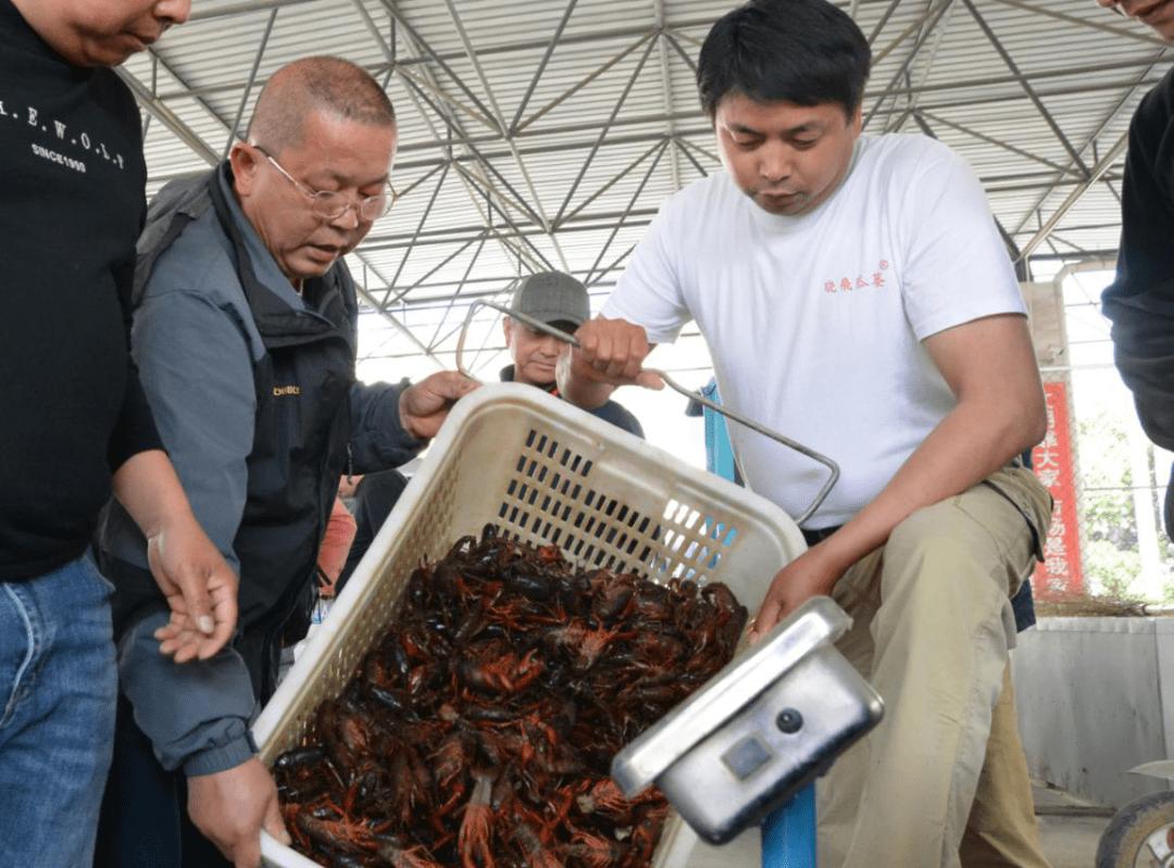 安徽巢湖:稻虾综合种养效果好