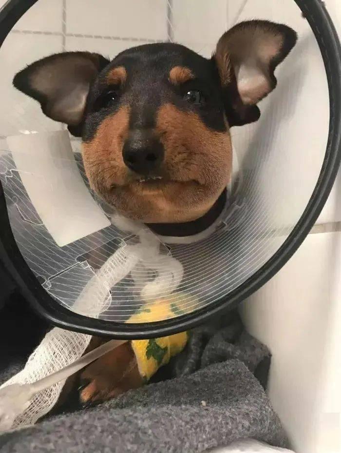 当狗狗倒霉的时刻...哈哈哈哈哈心疼但我忍不住哈哈哈哈哈!