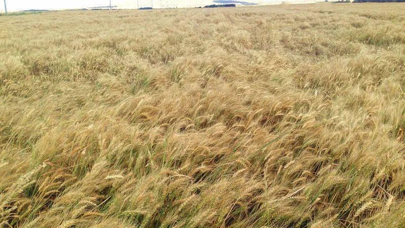 饲草料种植面积也实现了突破