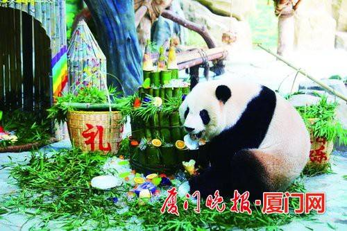 """双胞胎大熊猫5周岁生日收到""""火箭""""和""""竹筒蛋糕"""""""
