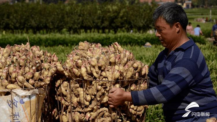 """济南莱芜:探索""""公司+基地+合作社+农户""""模式,带动农民增收致富"""