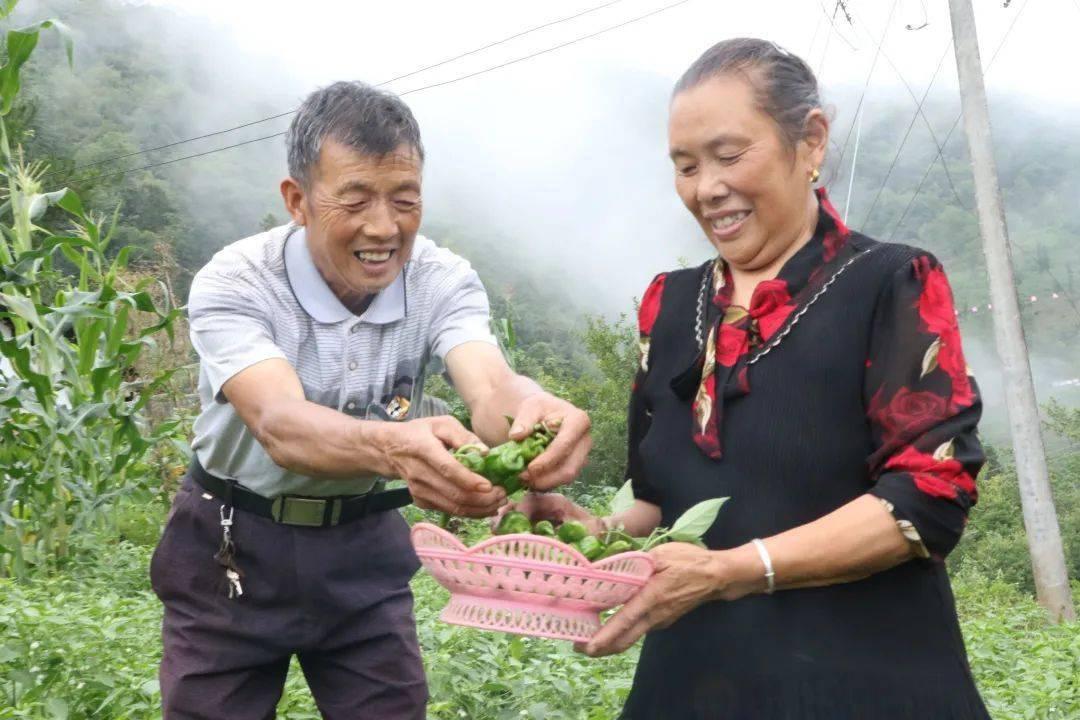 岚皋:山下农家乐,山上种菜乐
