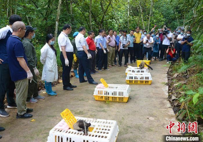 广西|广西放归一批陆生野生动物 人工繁育产业有序转型