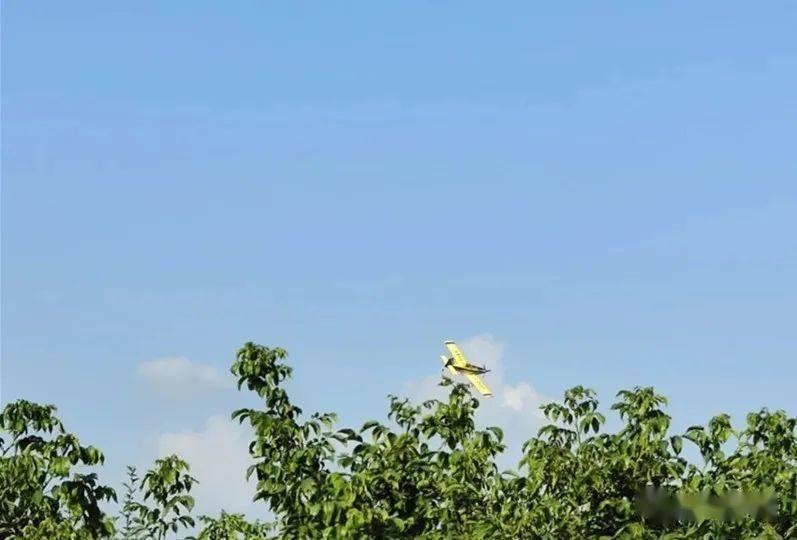 县林业局实现对森林食叶害虫的飞机控制 桓仁县