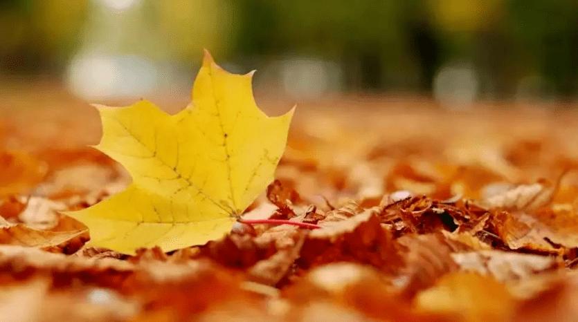 名中医吕雄:今日立秋,入秋微燥,不宜立即进补(推荐三款润燥汤)