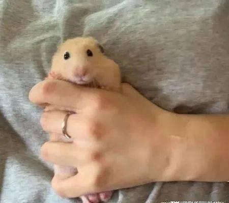 画面|原来小动物拍照也会摆POSE!网友意外捕捉到一个经典画面