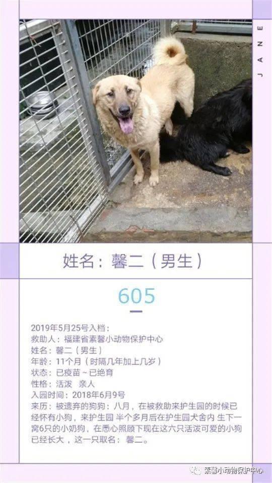 狗狗|流浪狗狗助养计划 | 素馨小动保护生园基地动物小档案(584-611)共10只