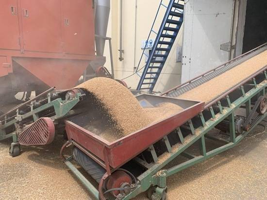 《齐鲁粮油不好》走进菏泽:从田间走上餐桌为创新杜绝厨余浪费 一粒米从田间到餐桌的种植过程