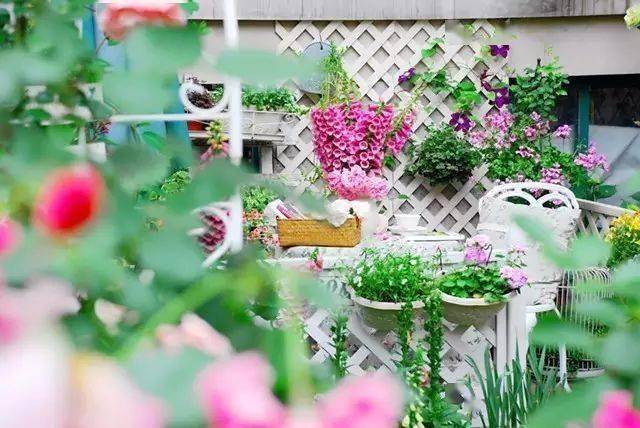 混泥土上种玫瑰,她用10年建成四季花园