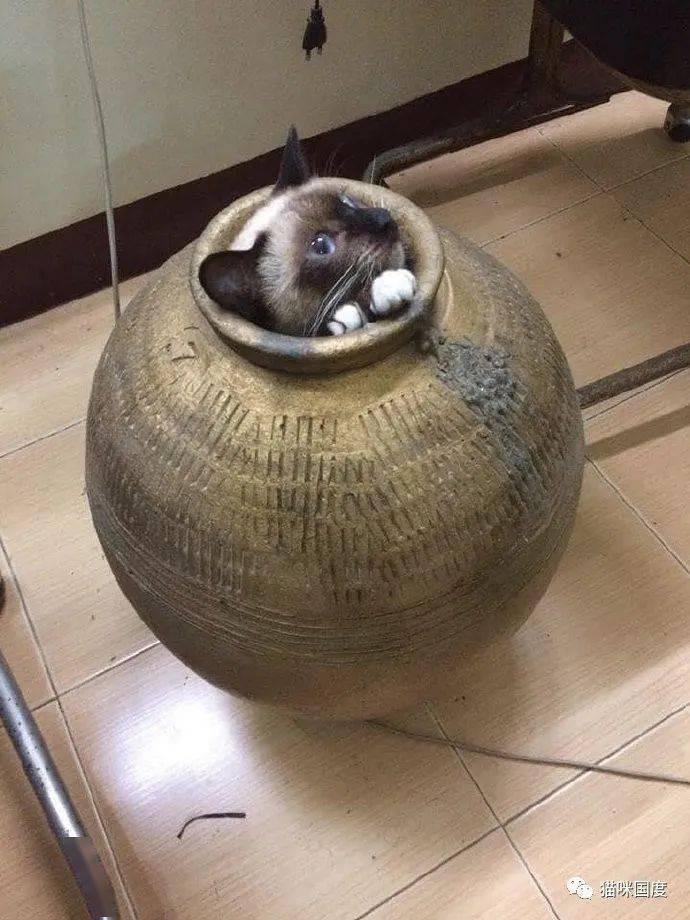 古有司马光砸缸 今有铲屎官救猫【大发app官网】(图1)