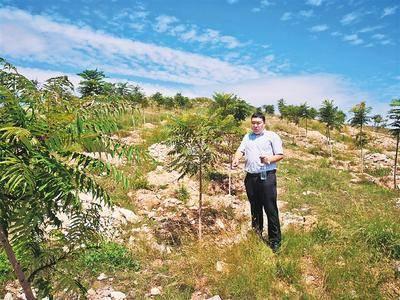废弃矿山变绿色屏障 废弃矿山治理方案