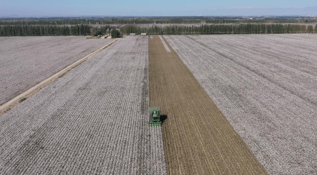 走向我们的小康生活|博乐市44.35万亩棉花迎来采收最忙时节