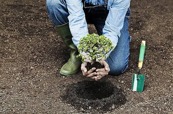蚂蚁集团井贤栋:花呗将对购买绿色环保商品提供优惠,蚂蚁森林模式有望落地菲律宾