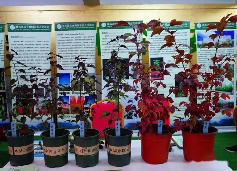 吉林省林草花果树苗交易会售出100多万株植物