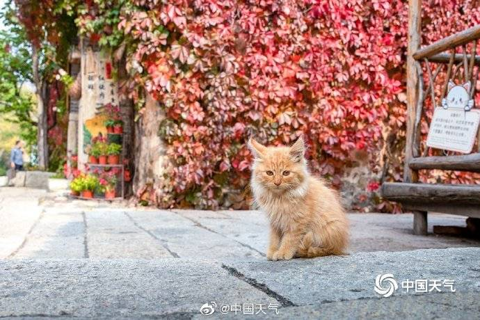 秋天可以有多少种颜色