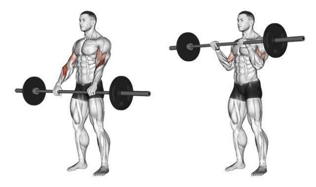 想练好山峰一样的肱二头肌,这9个细节很重要!
