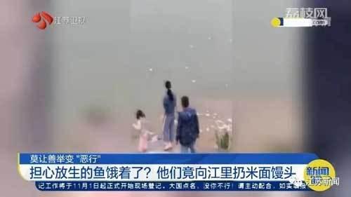 担心放生的鱼饿死,他们竟向江里大量扔馒头!网友:把江当自家鱼缸了?