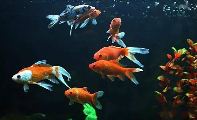资讯 | 每次给鱼换水后都放五勺盐,而这次…