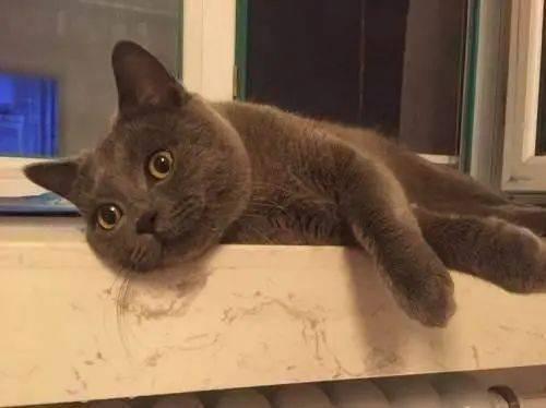 夜里叫的猫是公猫还是母猫,为什么叫得那么凄