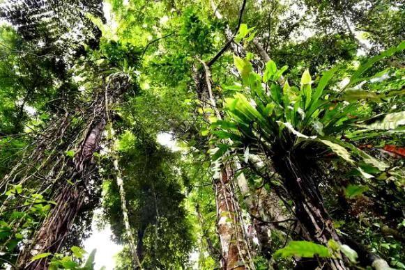 听说你想有一次惊险刺激的西双版纳雨林探险?安排!