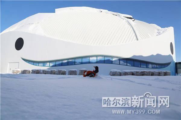 """大雪初晴 """"淘学企鹅""""开启今冬巡游 第一站打卡哈尔滨极地公园"""