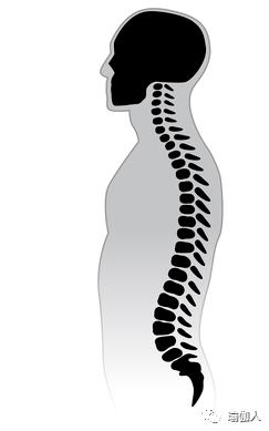 从站立的前弯处卷起可能会损坏脊椎