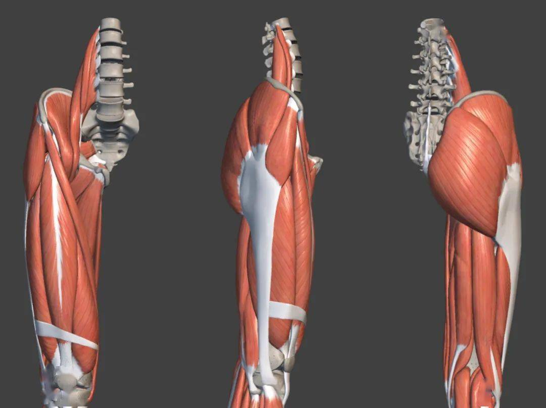 练瑜伽,大腿粗壮的2大原因,可能你一直想错啦!