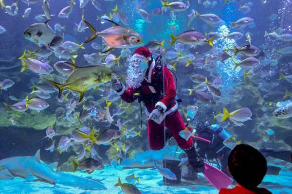 """吉隆坡:水中""""圣诞老人"""""""