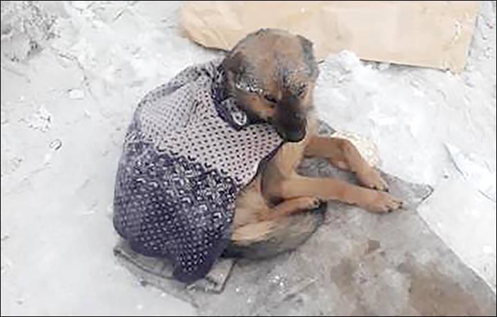 雅库茨克大量流浪动物死于零下50摄氏度的寒冷天气