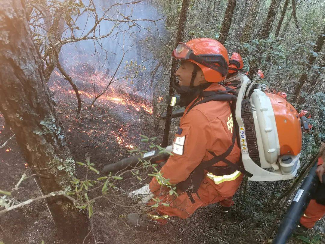 云南香格里拉发生森林火灾,已投入1100余人紧急扑救