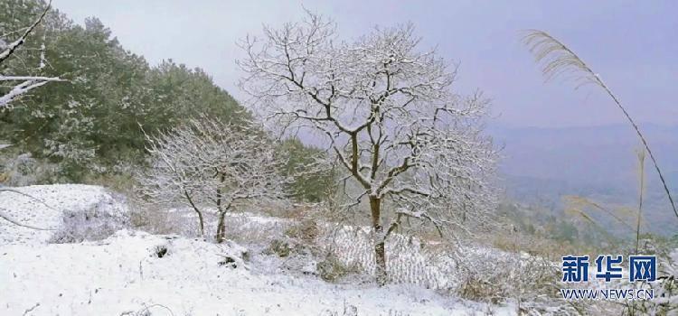 看个够!重庆新年首次雪景上新了!