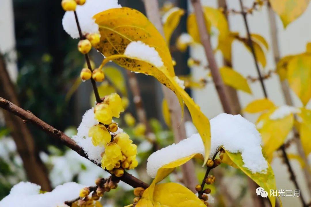 成都:冰雪仙境,唯美浪漫,孩子们的花园!