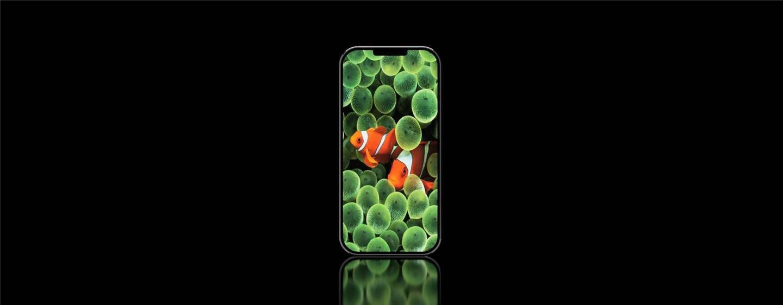 为 iPhone 诞生 13 周年,网友制作 iPhone 概念图