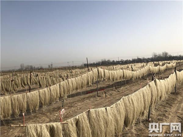 杞县:小红薯粉条变成惠民大产业链