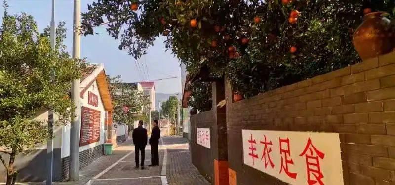 看梨花,品古酒,忆青春......贵溪农村文化多姿多彩