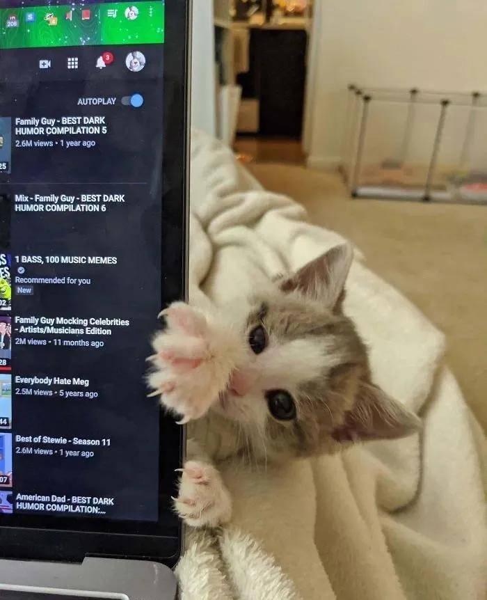 小猫咪锋利又可怕的爪爪,尖爪神兽来袭