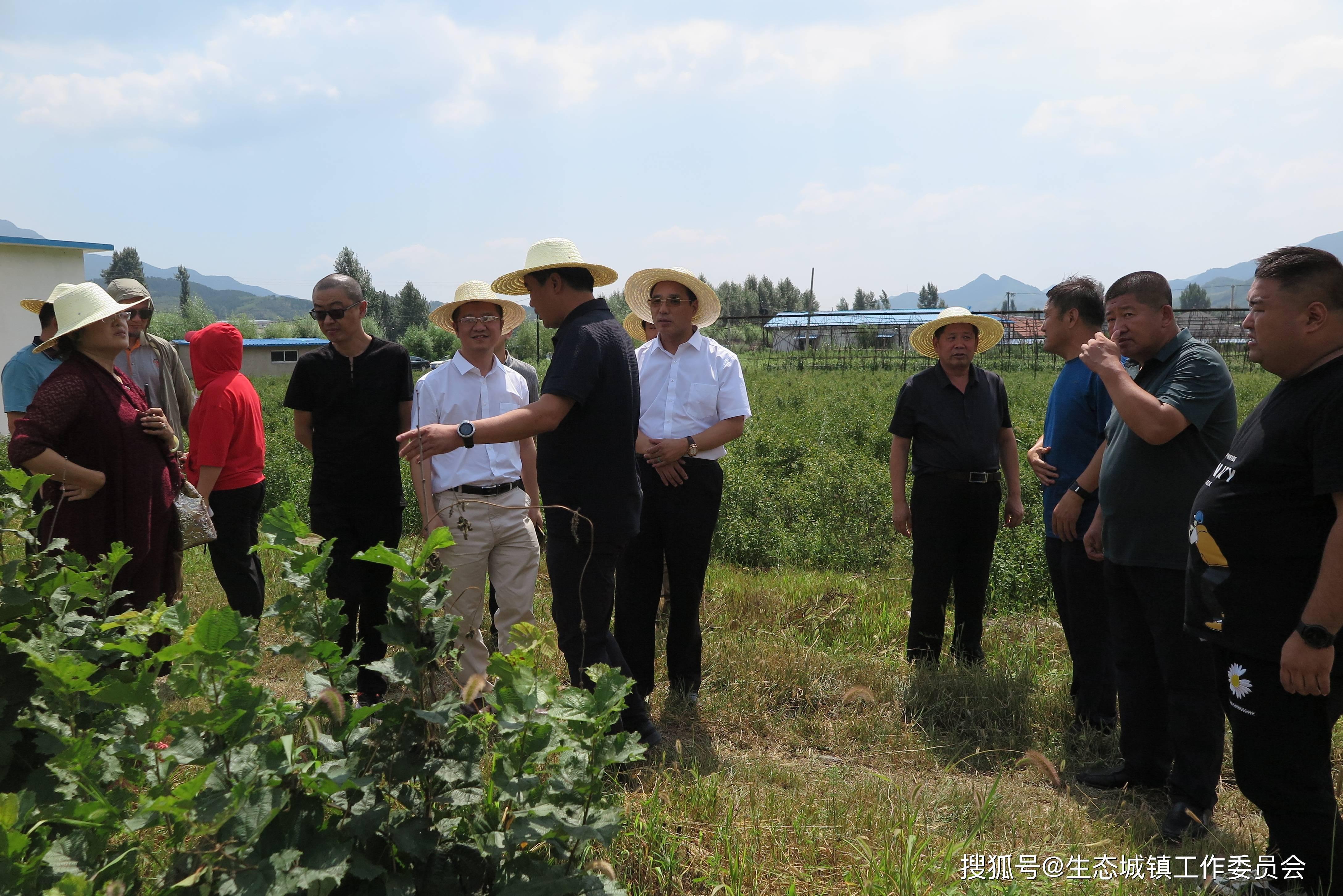 宽城亮甲台调整产业结构    发展林农产业助农增收