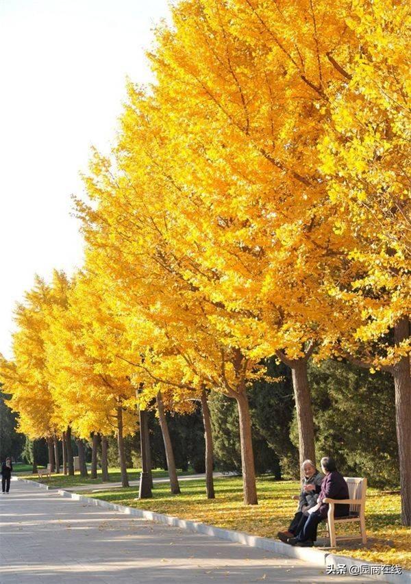 厦门市和台南市的市树都是(厦门市市树和市花是啥)