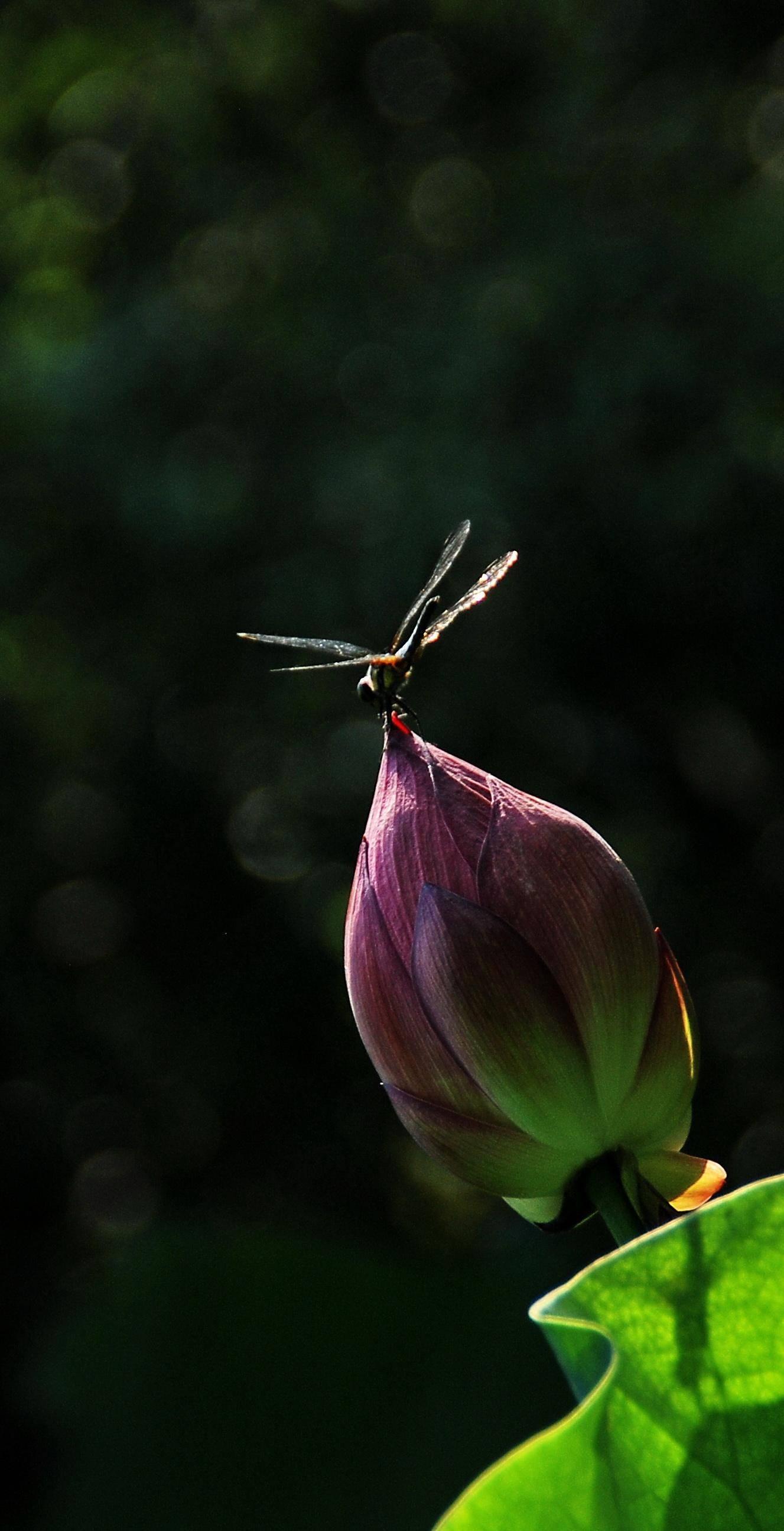 早有蜻蜓立上头全诗的意思,是夏天吗