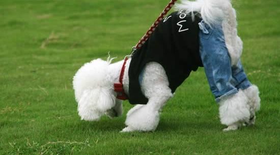 什么狗最聪明?十大聪明犬排名 网络快讯 第4张