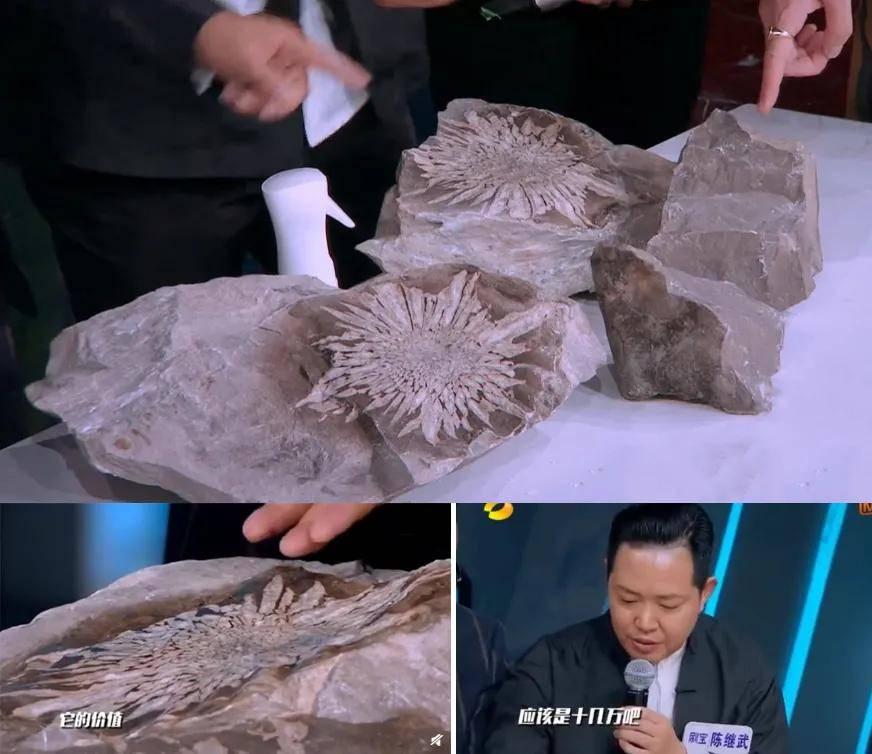 石头上开出绝世花纹,惊艳世界!