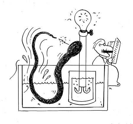 电鳗放电原理(电鳗为什么能够发电)插图(4)
