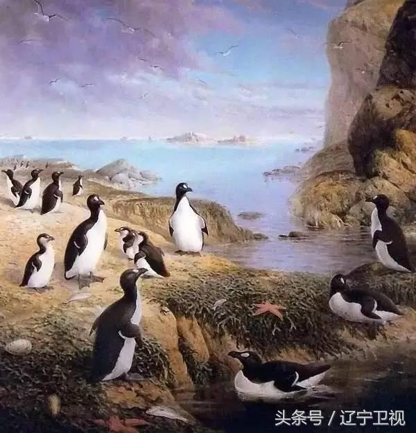 北极为什么没有企鹅?(北极熊为什么不吃企鹅宝宝呢)插图(5)