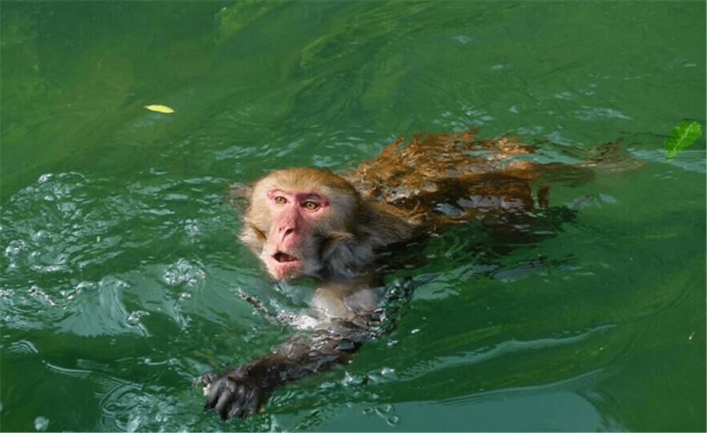 水猴子是什么动物(水猴子怕什么东西)插图